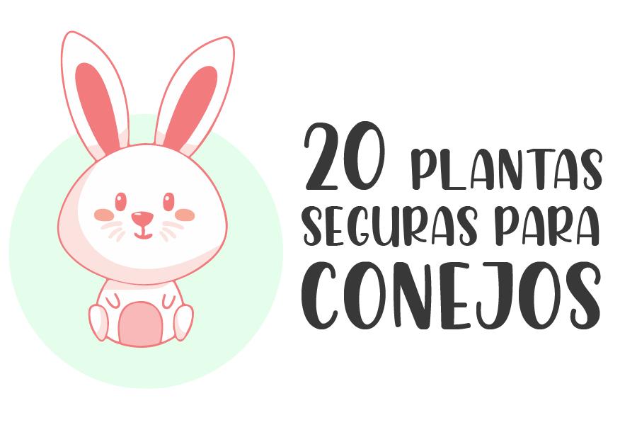 20 plantas seguras para conejos 1