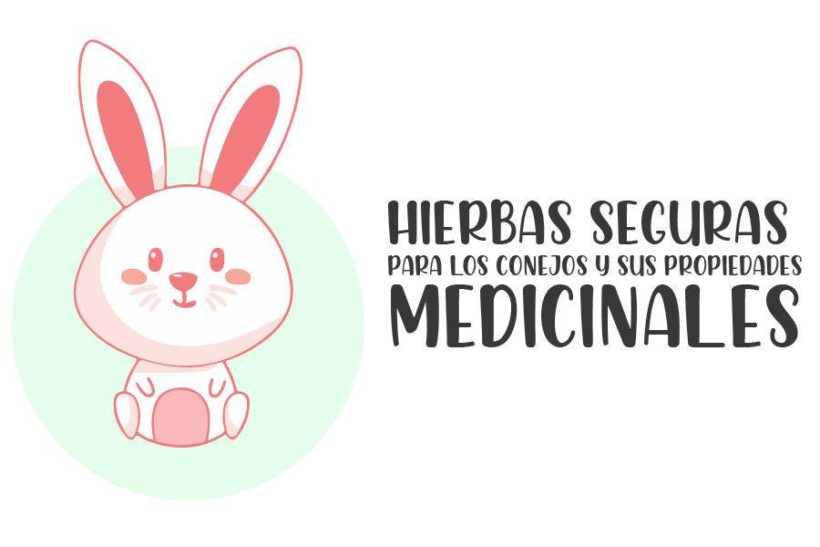 Hierbas seguras para los conejos y sus propiedades medicinales 1